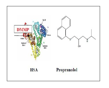 Studies of Interaction between Propranolol and Human Serum Albumin in the Presence of DMMP by Molecular Spectroscopy and Molecular Dynamics Simulation