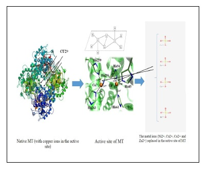 Structural and Activity Comparison of Native, Apo and Reconstituted Tyrosinase