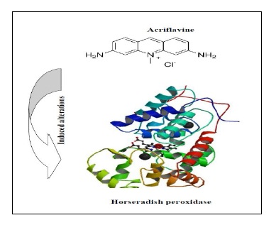 In Vitro Study of Acriflavine Interaction with Horseradish Peroxidase C