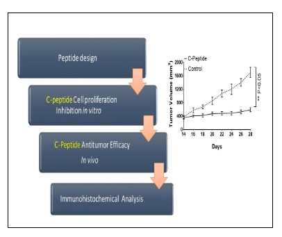Functional Studies on a Novel Engineered Peptide Derived from C-Terminal of Human Endostatin